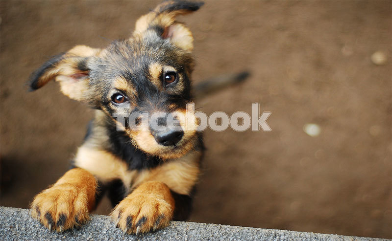 download-shutterstock