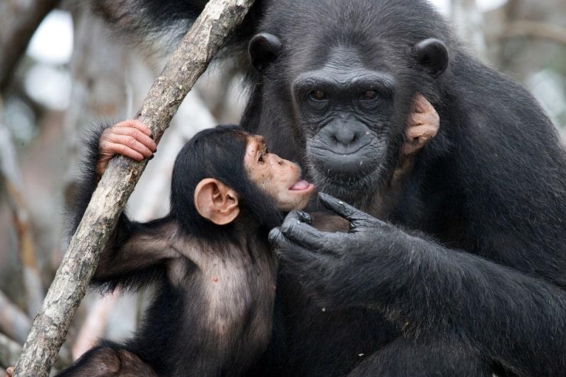 top động vật thông minh nhất
